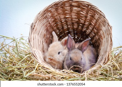 Two cute little rabbits like to play mischievously in baskets of wood and straw.