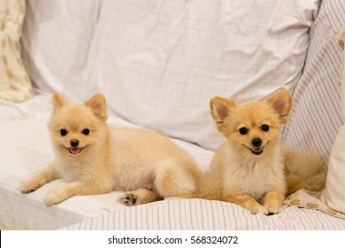 Puppy Fat Images Stock Photos Vectors Shutterstock