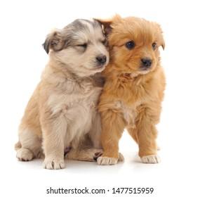 Two Puppies Images Stock Photos Vectors Shutterstock