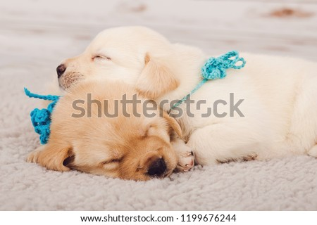 two cute puppies lying next each stock photo edit now 1199676244