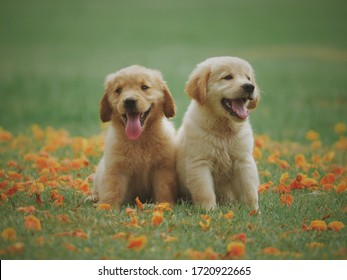 Two Cute Puppies Smiling on a Flowery Field