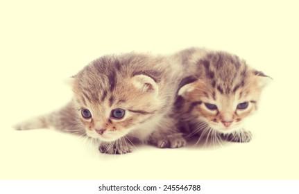 Two cute cute striped kitten