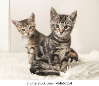 Two cute tabby baby cats sitting behind each other on a grey and white living room background