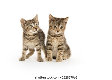Two cute tabby kittens on white background
