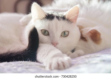 two cute white cats sleep together on the bed