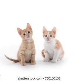 Two cute yellow tabby kittens isolated on white background