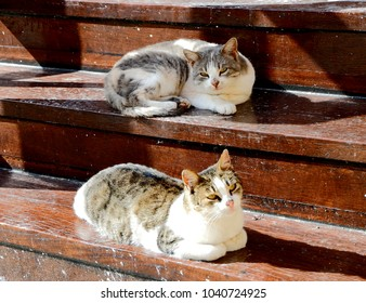 two cute young cats layed on wooden steps