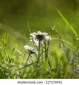 Two daisy's in shallow focus after a light shower