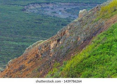 Two Dall sheep high upon a mountain slope in Denali National Park in Alaska.