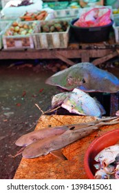 Two dead blacktip reef sharks on a local food market in Labuan Bajo, Indonesia.