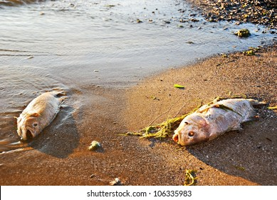 Two Dead Fish on a Polluted Beach at Sunset