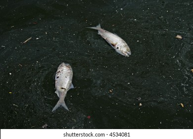 Two dead fish surrounded by pollution