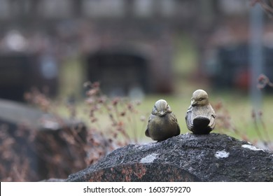 Two decorative metal birds on top of a gravestone. Behind, there are other graves. Concepts of death, faith, family and after life.
