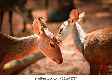 Two deer caring care