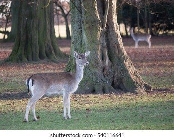 two deer mirroring each other near a tree