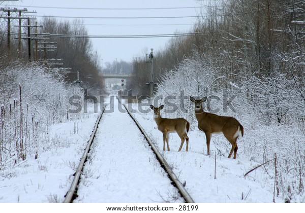 Two deer in snow by railroad