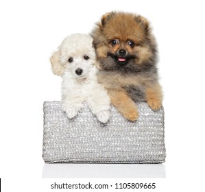 Two different puppies in a basket on a white background. Baby animal theme