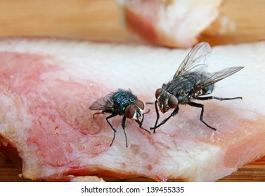 Two Dirty House Flies on a piece of red meat