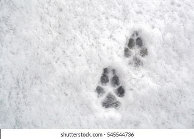 Two dog footprints in the snow