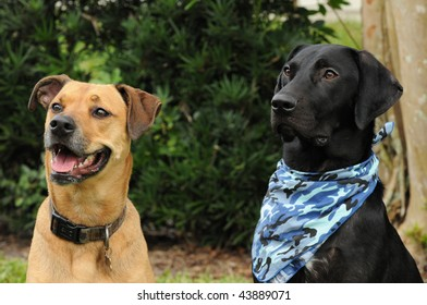 Two Dog Friends Sitting Up and Looking towards their owner and awaiting their Commands