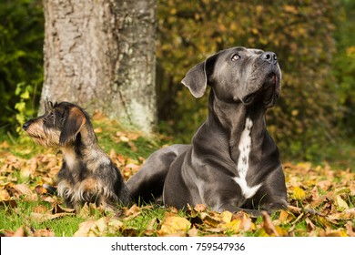 Two dogs in autumn leaves