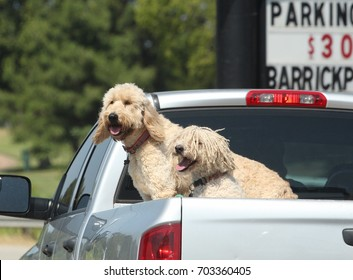 Two dogs at the back of a pickup truck in the parking lot