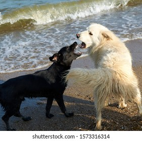 two dogs bark at each other