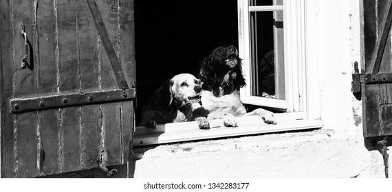 Two dogs barking from the window on passing by people. Preventive measures,preventive action concept.  Property insurance and security abstract idea. Black and white photo.