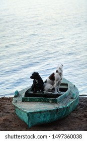 two dogs of black dog staffbull dog and white puppy with chocolate spots American pit bull Terrier dog sitting in an old fishing boat on the coast by the water in the summer