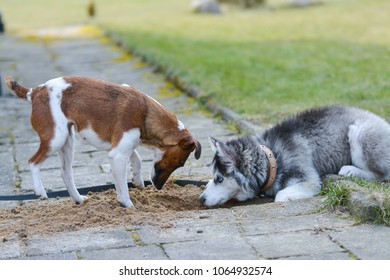 Two dogs are busy digging a hole