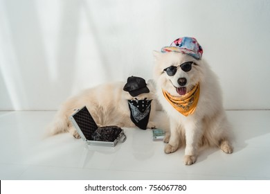 two dogs in caps and bandanas sitting with money and black bag in metallic briefcase