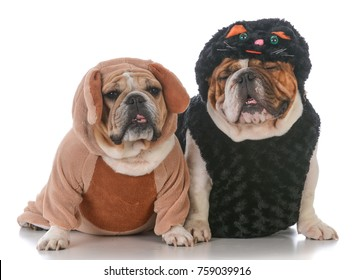 two dogs in cat and dog costumes on white background
