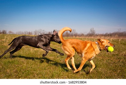 two dogs chasing each other playfully in a field