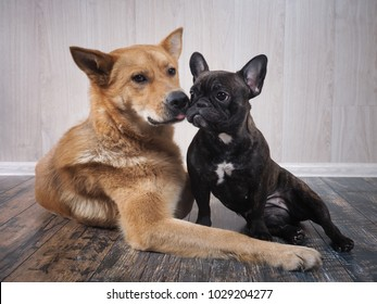 Two dogs of different breeds. Animals sit together.