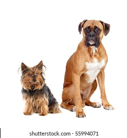 Two dogs of different breeds isolated on a white background