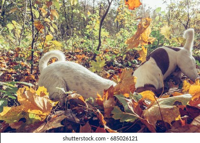 Two dogs digging outdoors on autumn season