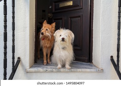 Two dogs at the doorstep