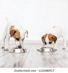 Two dogs eating from bowl. Pets eating dogs food