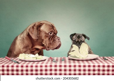 Two dogs eating lettuce sat at a table with a gingham tablecloth against a plain teal backdrop. Pug and French mastiff.