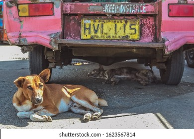 Two Dogs Finding Shade from Hot Sun