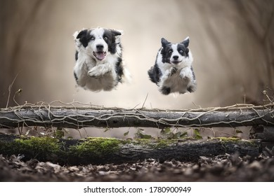 Two dogs are flying through obstacles to drive home