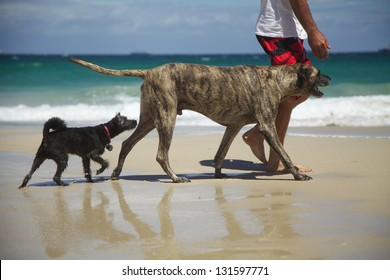 Two Dogs - Follow the Leader