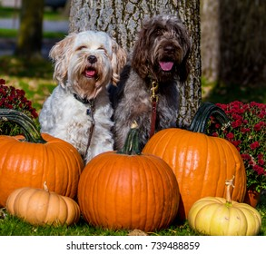 Two dogs getting ready for fall
