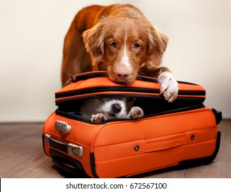 Two dogs are going on vacation, a small dog is hiding in a suitcase