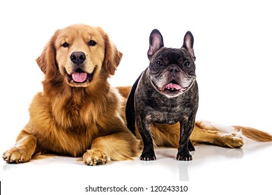 Two Dogs, a golden retriever and a French bulldog.