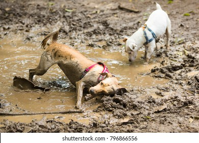 Two dogs having fun in a mud puddle