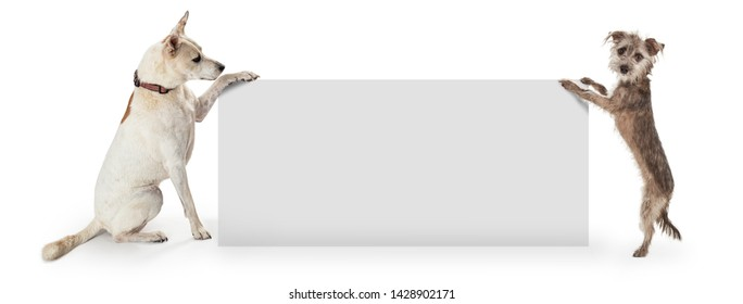 Two dogs holding up a blank white sign with room for your marketing text. Sized for web banner or social media cover