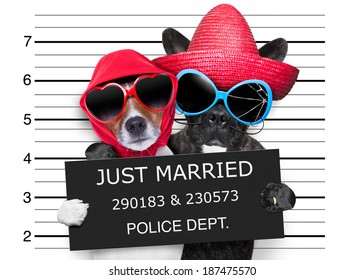 two dogs just married and together in a mugshot picture