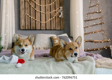 Two dogs laying on th ebed with Santa's hat and Christmas lights in the background looking playful