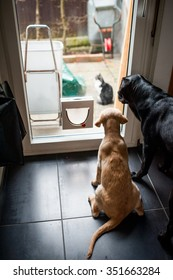 Two dogs are looking at a cat through glass.